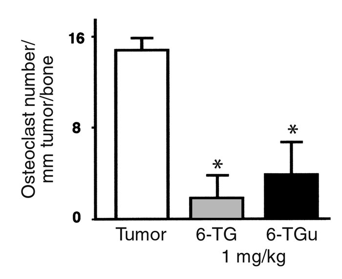Effect of 6-thioguanine and 6-thioguanosine on osteoclast number per mil...
