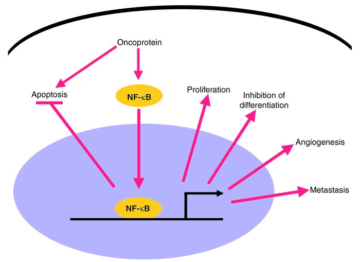Roles of NF-κB in oncogenesis and in cancer chemo- and radioresistance. ...