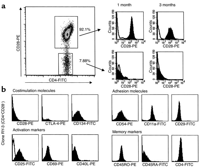 Longitudinally followed CD4+CD28– subpopulations have a stable CD28– sur...