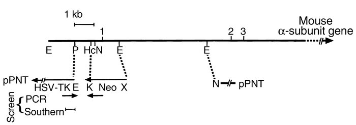 Mouse Schematic Diagram