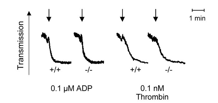 Platelet shape change in Gαi2–/– mice. Shape change in response to ADP a...