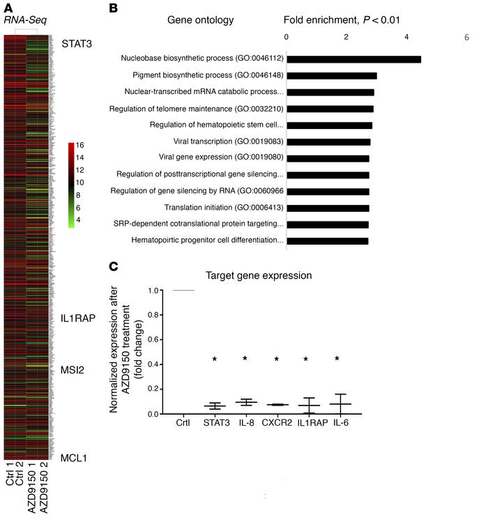 STAT3 downregulation by AZD9150 leads to downregulation of oncogenic and...