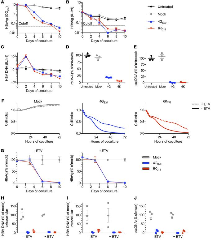 Antiviral effect of TCR-grafted T cells on HBV-infected cells. HepG2-NTC...