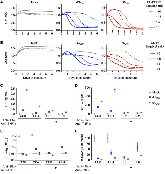 Antiviral activity of different TCR-grafted T cell subsets. HepG2-NTCP c...