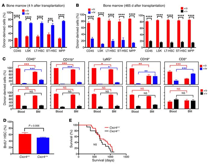 The superiority of Cxcr4+/o BM for blood reconstitution after competitiv...