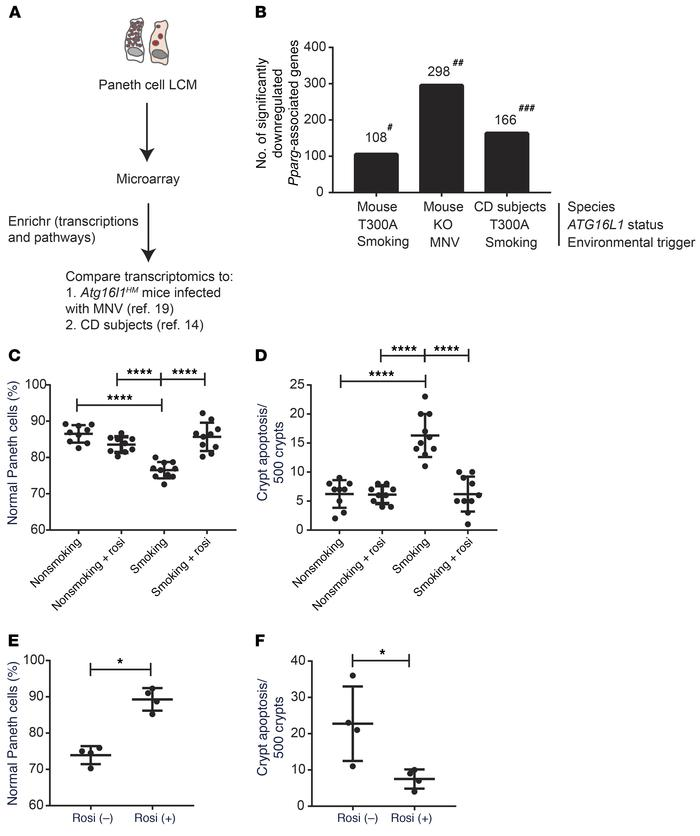 Pparg-associated metabolism dysregulation resulted in crypt base apopto...
