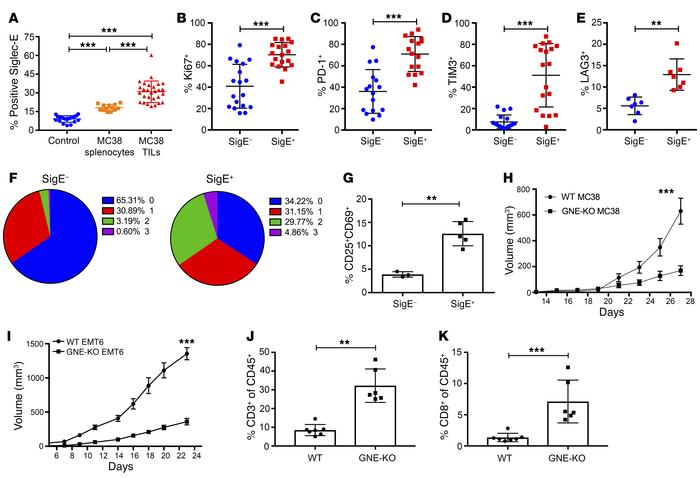 Sialylated SAMPs enhance immune escape and tumor growth in vivo. (A) Sig...