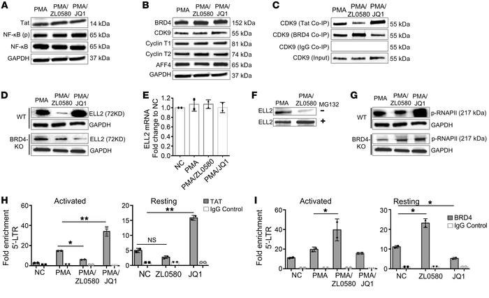 ZL0580 inhibits Tat transactivation and key factors in HIV transcription...