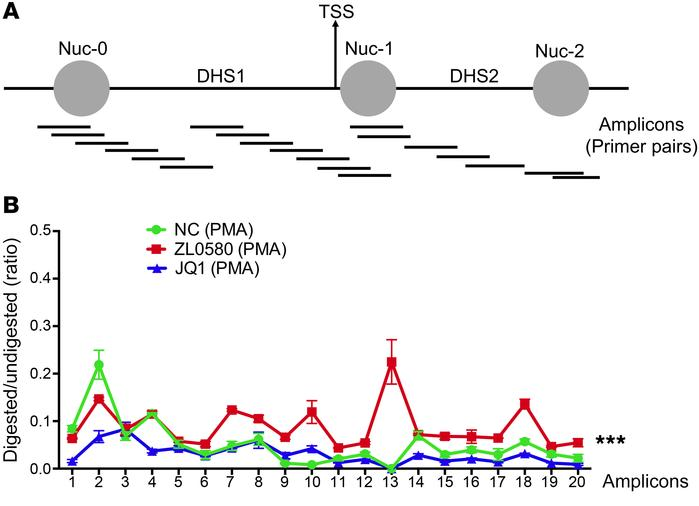 Analysis of chromatin structure in HIV LTR by high-resolution MNase nucl...