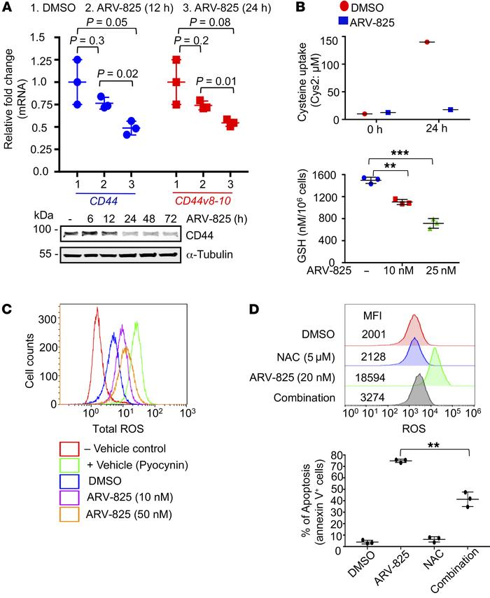 ARV-825 downregulates CD44v8–10, increases ROS, and maintains oxidative ...