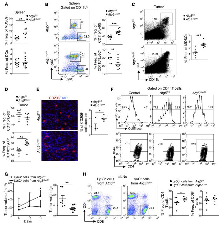 Impaired suppressive function of tumor-infiltrating autophagy-deficient ...