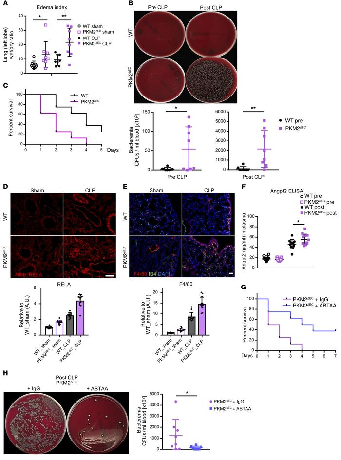 Deletion of endothelial PKM2 exacerbates sepsis-induced responses and mo...