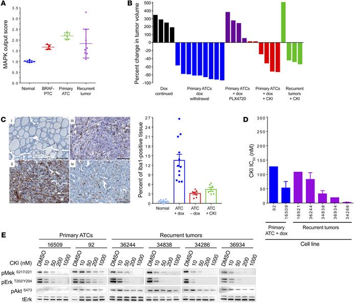 Reactivation of the MAPK pathway drives tumor recurrences. (A) MAPK outp...