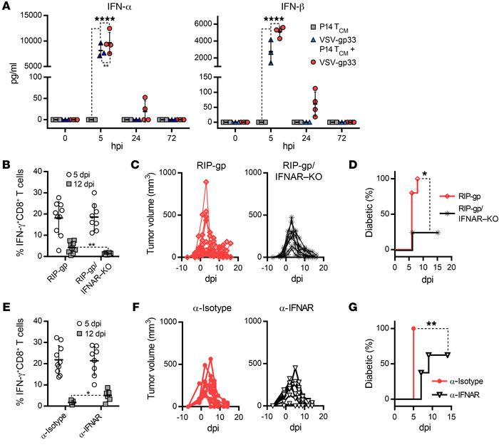 IFN-α/-β signaling couples diabetes with tumor regression. (A) Systemic ...