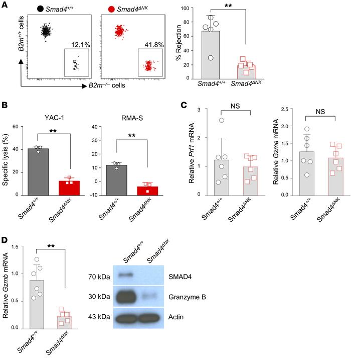 Impaired rejection of B2m–/– target cells and decreased Gzmb in Smad4-de...