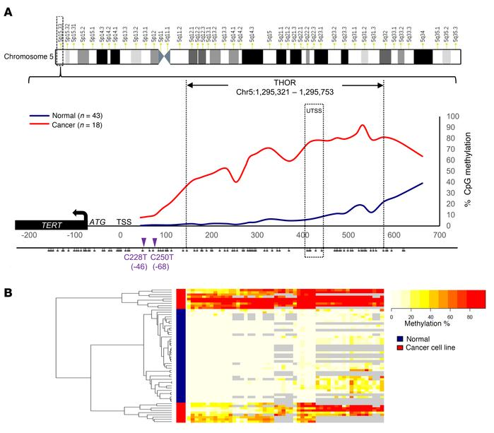 Defining THOR through DNA CpG methylation analysis of the TERT promoter....