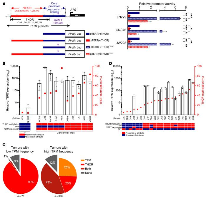 Coexistence and interplay of TPM and THOR hypermethylation in human canc...