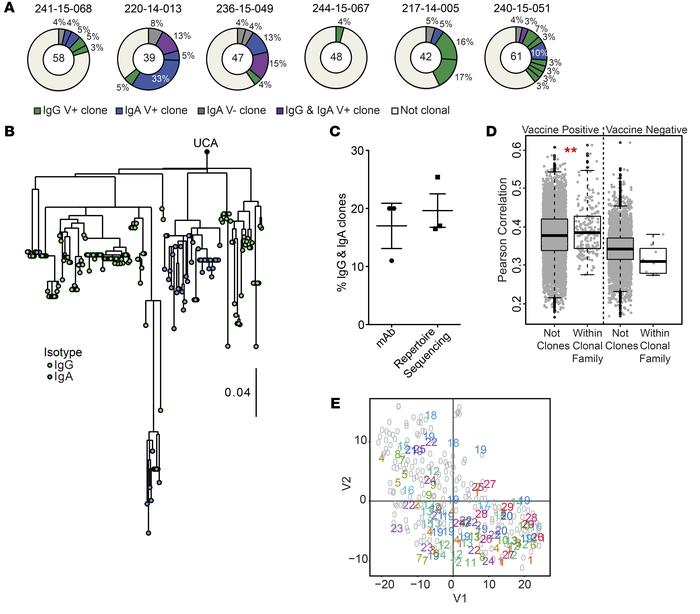 Clonal plasmablasts display increased transcriptional similarity. (A) Cl...