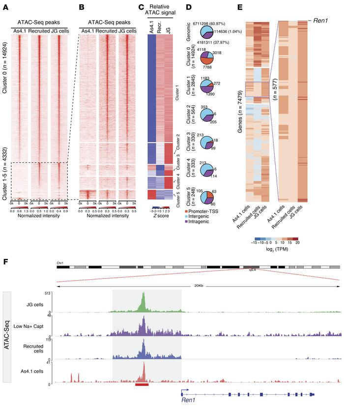 Comparative analysis of chromatin states across renin cell types. (A and...