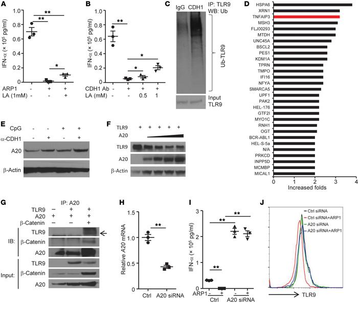 A20 degrades TLR9 protein in pDCs induced by CDH1 activation. Concentrat...