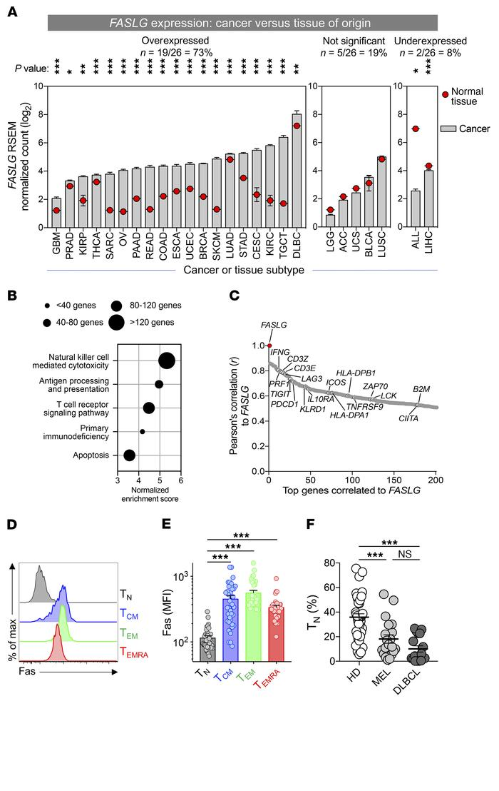 Human TMEs overexpress the death-inducing ligand FASLG. (A) A pan-cancer...