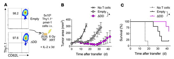 Adoptive transfer of Fas DNR–modified T cells enhances antitumor efficac...