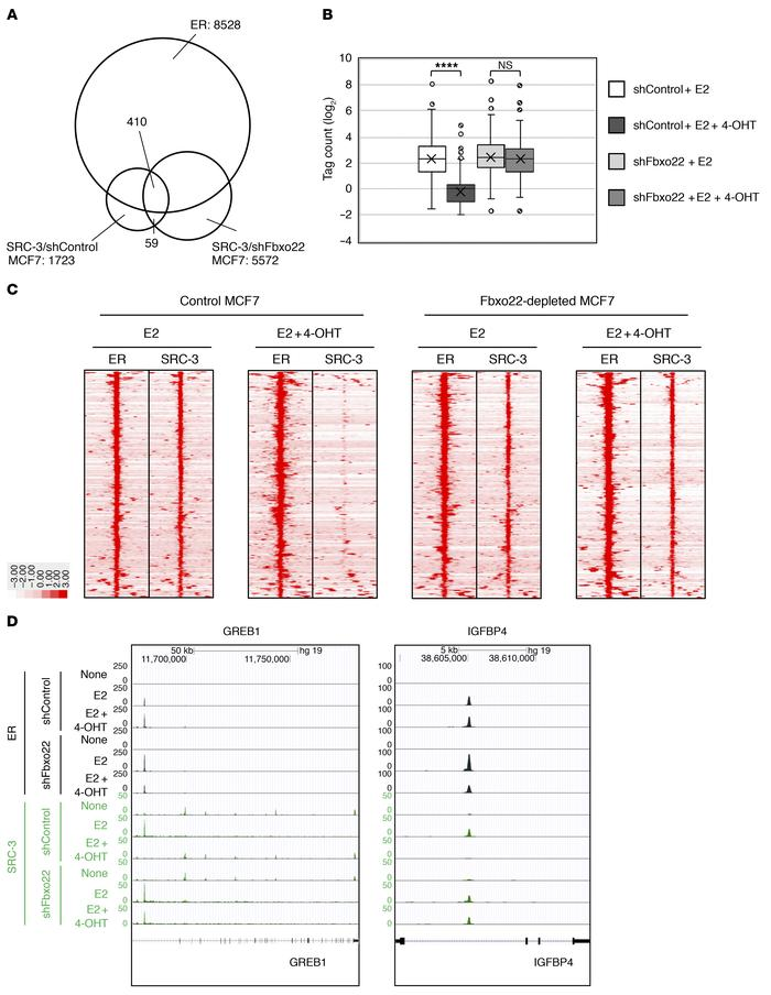 Genome-wide analysis revealed that TAM-mediated dissociation of SRC-3 fr...