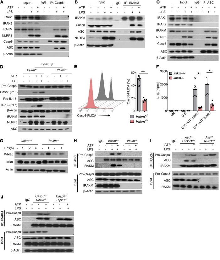 IRAKM controls the activity of caspase-8 and IL-1β production in microgl...
