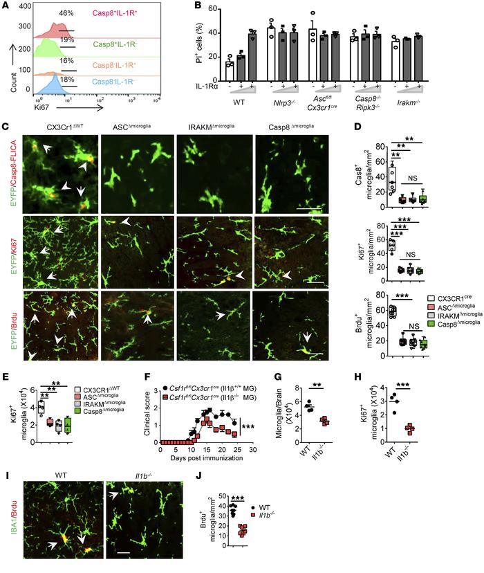 Microglia-intrinsic caspase-8 inflammasome activation is required for mi...
