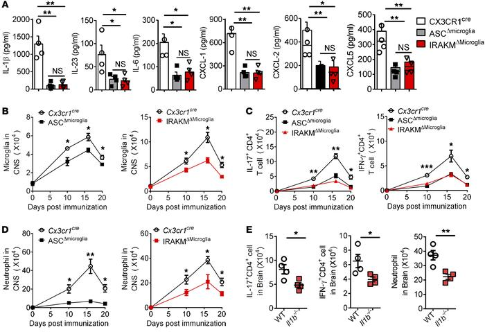 Microglia-intrinsic IRAKM–caspase-8 inflammasome activation is required ...