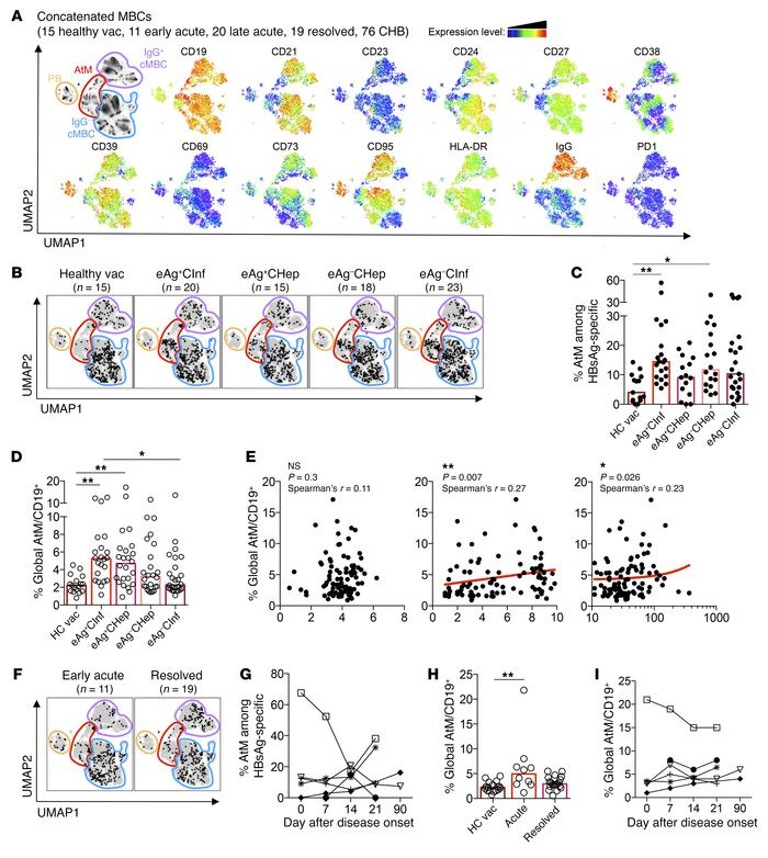 HBsAg-specific and global B cells of CHB patients are enriched for an At...