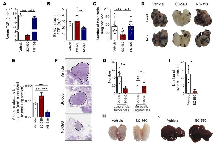 The inhibition of COX-1 is sufficient to reduce metastasis. (A and B) Co...