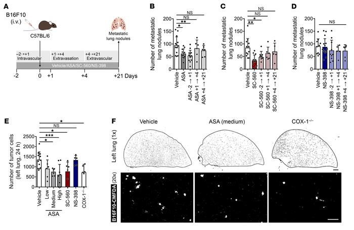 COX-1 inhibition affects the intravascular phase of metastasis. (A) Expe...