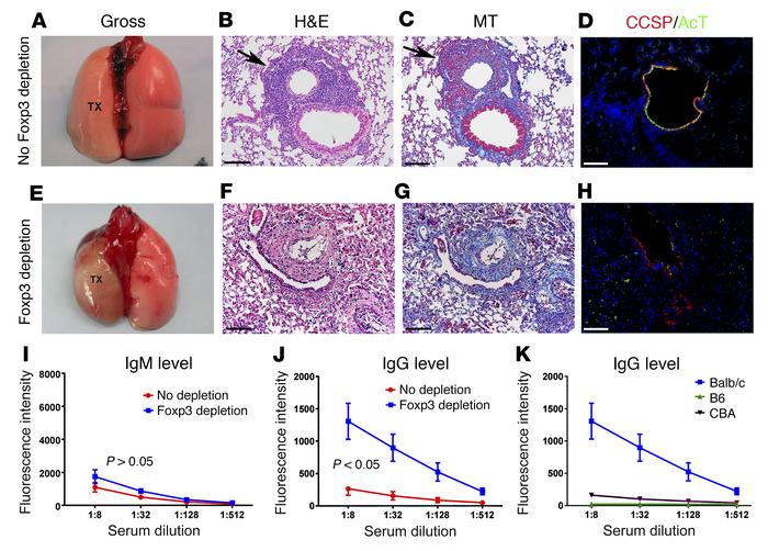 Graft-resident Foxp3+ T cells maintain lung transplant tolerance. (A and...