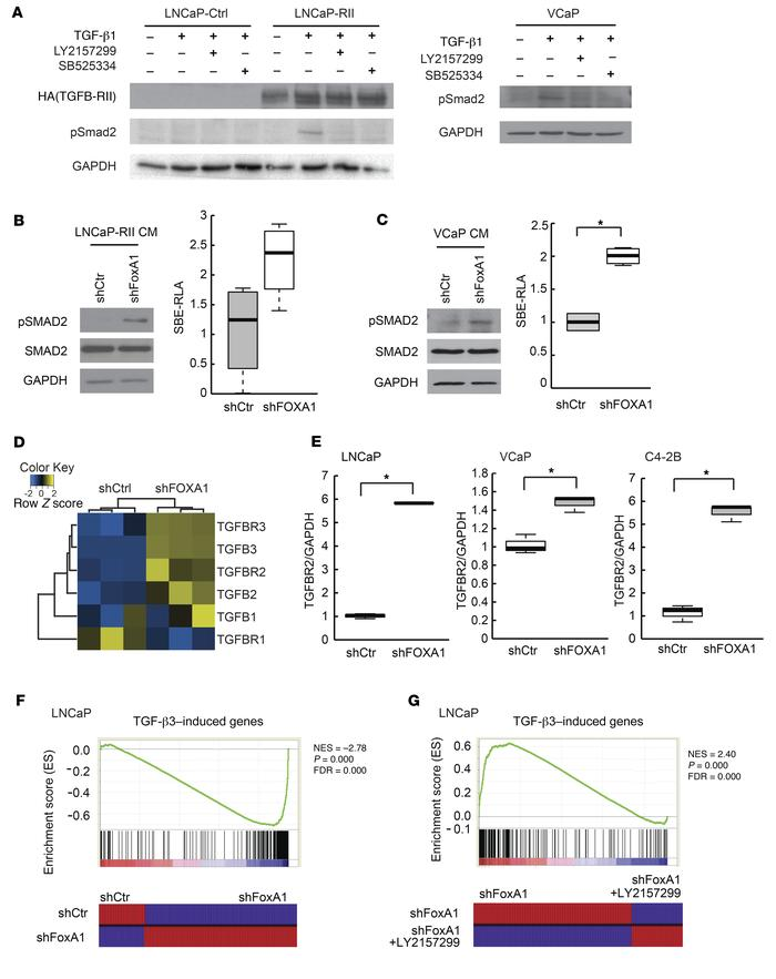 FOXA1 loss activates TGF-β signaling in PC cells. (A and B) LNCaP-Ctrl, ...