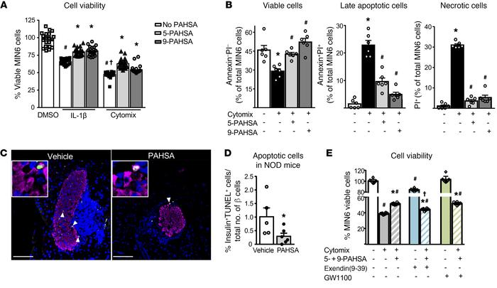PAHSA treatment increases islet β cell viability and attenuates cytokine...