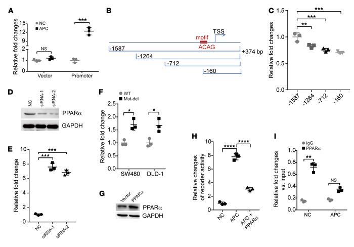Upregulation of lncRNA-APC1 by APC is partly dependent on the binding of...