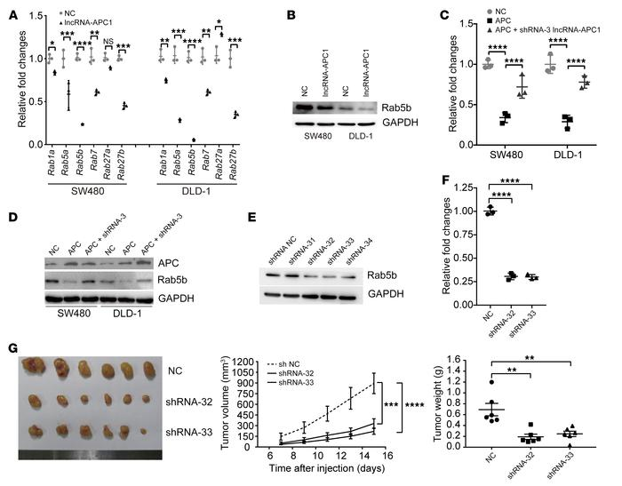 lncRNA-APC1 reduces the production of CRC exosomes through Rab5b. (A) Re...