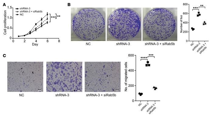 lncRNA-APC1 silencing enhances the proliferation and migration of CRC ce...