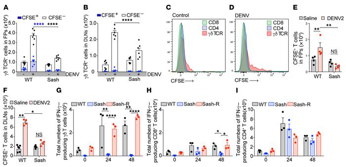 MC-dependent recruitment, proliferation, and activation of γδ T cells at...