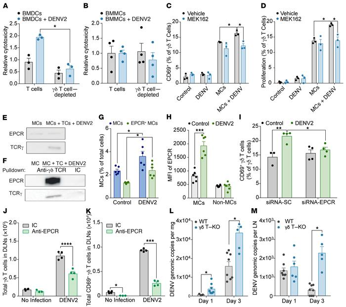 MC- and antigen-dependent γδ T cell activation is mediated through EPCR ...
