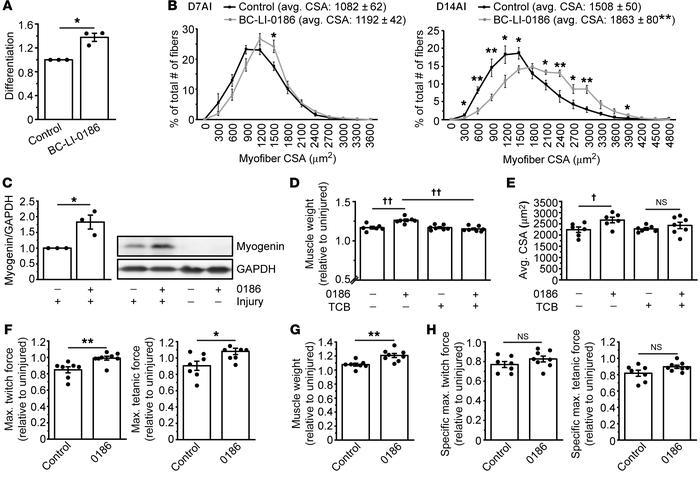 An inhibitor of LRS-Rag interaction enhances muscle regeneration. (A) C2...