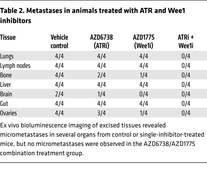 Metastases in animals treated with ATR and Wee1 inhibitors