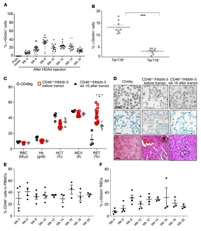 Analysis of in vivo–transduced CD46+/+/Hbbth-3 mice that did not receive...