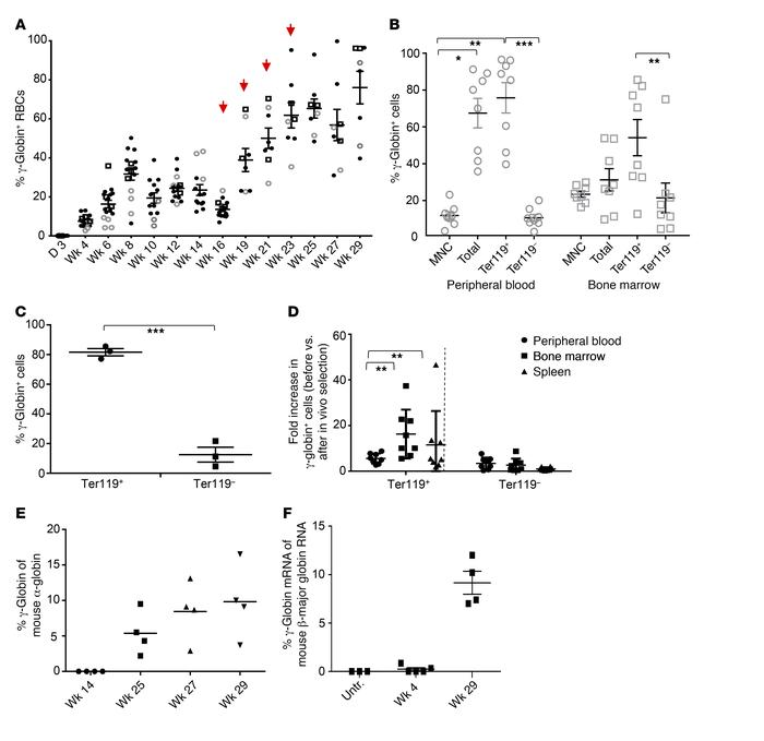 Analysis of γ-globin expression in in vivo–transduced CD46+/+/Hbbth-3 mi...