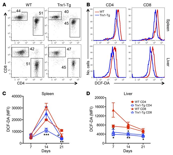 Trx1 modulates ROS concentration after allogeneic T cell response. Purif...