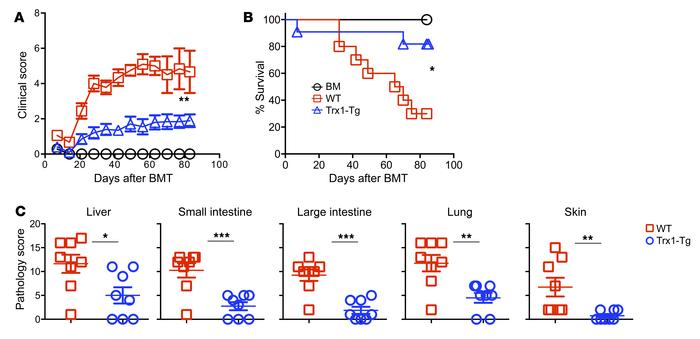 Overexpression of Trx1 in T cells reduces GVHD mortality after allo-BMT....