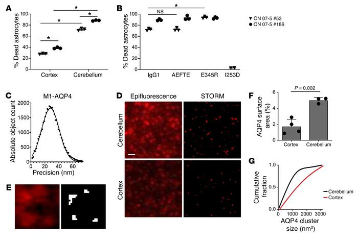 AQP4 rAb CDC and AQP4 expression in primary astrocyte cultures. (A and B...