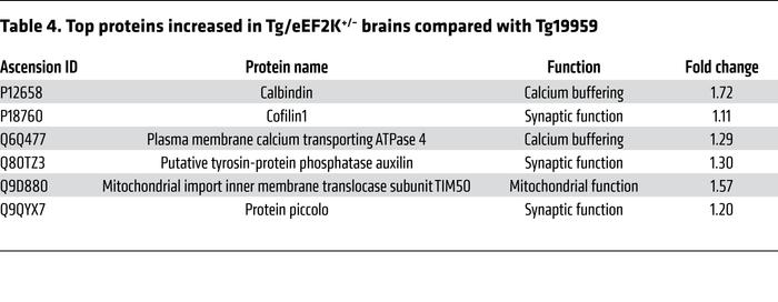 Top proteins increased in Tg/eEF2K+/– brains compared with Tg19959