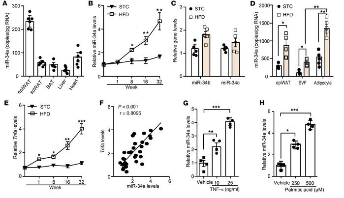 MiR-34a is highly expressed in mature adipocytes of visceral adipose tis...